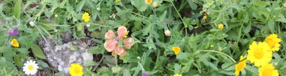 Spring Flowers in Loubar
